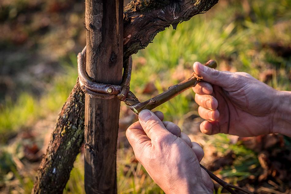 vino bastia valdobbiadene prosecco frizzante