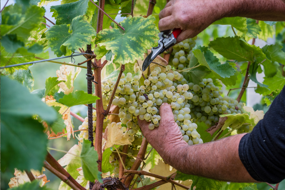 valdobbiadene vino spumante